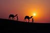 DSC_0252 (rajashekarhk) Tags: sky sunset silhouette landscape sun india rajashekar red rajastan colours camel desertfestival desert nikon nature naturephotography culture colour khuhri no northindia