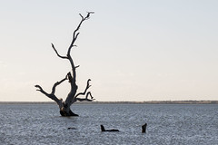 Lake Bonney - Australia (wietsej) Tags: lake bonney australia dead tree rx10 iv rx10m4 nature