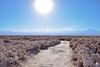 Way of Salt, San Pedro de Atacama, Chile. (mauro.camposbravo) Tags: salar atacamadesert saltway