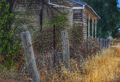 The Old Courthouse (holly hop) Tags: bealiba fencefridays fence wooden old abandoned neglect decay ruraldecay empty