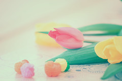 Tulips (Vv-PhoTo) Tags: flowers tulip card beauty soft color closeup still life gentle nature flora 7dwf pink yellow red