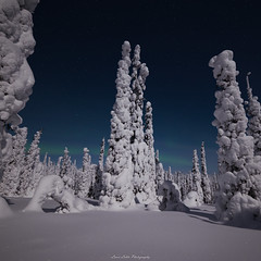 Stars Above Us (laurilehtophotography) Tags: 2018 posio riisitunturi talvi suomi finland landscape nightscape nature night cold winter snow ice trees forest mountain sky stars auroras auroraborealis northernlights nikon d610 samyang 14mm longexposure moon moonlight awesome earth europe lapland revontulet tunturi maisema luonto yö