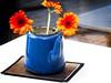 Gerbera Teapot (garryknight) Tags: panasonic lumix dmctz70 on1photoraw2018 london creativecommons ccby30 borough londonbridge teapot flower plant gerbera orange blue