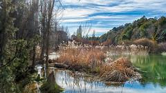 El río (miguelangelortega) Tags: río river agua water cañaveral masegar juncos vegetaciónderibera piinar pine tree pinetree cielo sky reflejo reflection chopo aliso fresno pinar