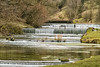 River Lathkill Cascades (little mester.) Tags: lathkilldale riverlathkill derbyshire derbyshirepeakdistrict limestone water cascades