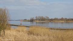 de Lek (♥ Annieta ) Tags: annieta maart 2018 sony nederland netherlands krimpenerwaard polder rivier river riviere lek water riet reed allrightsreserved usingthispicturewithoutpermissionisillegal hx350