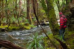 Pine Valley, Lake St Clair National Park (tastrails) Tags: tasmania tastrails pine valley lakestclair overland hiking cradlemountain tasmanian tasmanianbushwalking tas acropolis geryon labyrinth