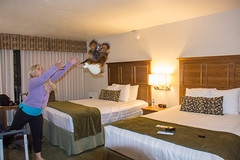 Tossing stuffed animals in the hotel room (m01229) Tags: d7200 newport oregon unitedstates us