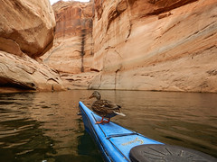 hidden-canyon-kayak-lake-powell-page-arizona-southwest-9783