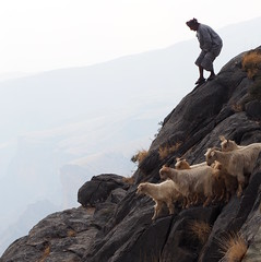 Life on the edge!  Goat herder and his flock (RJAB2012) Tags: alhajar goatherder oman flock danger goat 100v10f