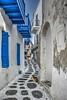 ... y si paseamos por Mykonos!! (Juanjo RS) Tags: mykonos grecia greece calle street azul nikon nikond7100 gato balcones terrazas europa europe ciudad town pueblo cat photography photo ventana window cicladas islascicladas