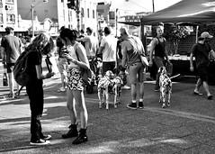 Newtown Markets (gro57074@bigpond.net.au) Tags: bw dalmatians markets newtown kingstreet dogs