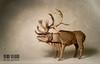 CARIBOU (atilla yurtkul) Tags: caribou satoshi kamiya origami paper paperoflexia atilla yurtkul geyik