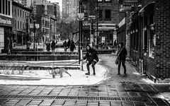 J'en suis sûr!!! Il est passé par ici. (francis_bellin) Tags: 2018 chien noiretblanc streetphoto street rue photoderue monochrome montréal mars neige