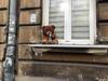 Sunday morning in Kraków (Bex.Walton) Tags: travel poland kraków krakow weekend longweekend citybreak bear teddybear beer sundaymorning themorningafter hangover