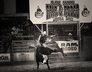 024693763290-97-Cowboy Bull Riding at the Clark County Fair and Rodeo-4-Black and White