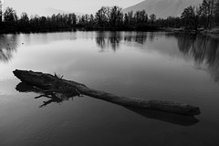 Bolle di Magadino, bn (MarcoAgustoniPhotography) Tags: blu bolle di magazzino ticino fiume lago riflessi alberi tronchi specchio