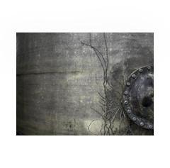 Steel and survivor nature ! (José Luis Cosme Giral) Tags: steelandsurvivornature minimalism decay survivingnature textures barebranches olympus pamplona navarra suburbanplace ivy