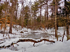 Winter in the Woods - 9 (Stan S. Gallery) Tags: frozen cold winter snow ice tree trees landscape wood woods forest reserve pond creek stream brook reflections wet water winterbeauty