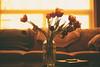 Warmth (flashfix) Tags: march202018 2018inphotos ottawa ontario canada nikond7100 40mm nikon flashfix flashfixphotography tulip macrp vase water bubbles highkey sunshine masonjar book coffeetable couch livingroom stilllife