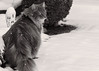 Makes you wonder .... (FocusPocus Photography) Tags: fynn fynnegan katze kater cat chat gato tier animal haustier pet schnee snow winter bw sw mono
