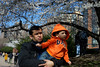 Cherry Blossoms (dtanist) Tags: nyc newyork newyorkcity new york city sony a7 konica hexanon 40mm manhattan roosevelt island visitors cherry blossom blossoms boy father kid child bloom