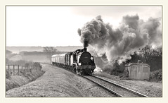31806 between Harmans Cross and Corfe Castle. (johncheckley) Tags: d90 uksteam steam locomotive train railway