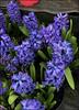 (Cliff Michaels) Tags: 8 photoshop pse9 kroger flowers walmart