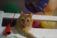 Cat Mattis (vladimirfeofanov) Tags: