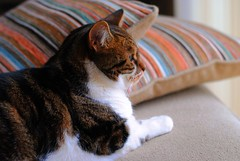 Brian looking out of the window (zawtowers) Tags: brian cat kitty feline cute adorable sitting looking window people watching stare orange cushion sat relaxed content happy