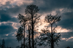 Backyard Photography (MJ6606) Tags: trees spring landscape sunset backyard nature flowersplants sky evening clouds florida