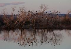 LA MARE A MARIO-ARLES (thierrymuller) Tags: art bird mamanano elpadrepicture tamron thierrymuller nikon nikonflickraward oiseau eau arbre ciel
