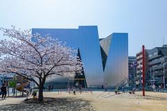The facade, The Sumida Hokusai Museum (すみだ北斎美術館) (christinayan01 (busy)) Tags: sanaa kazuyo sejima architecture museum building perspective tokyo japan blossom cherry sakura