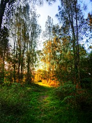 Evening track I (elphweb) Tags: bush bushy forest tree trees woods hdr highdynamicrange nsw australia seaside