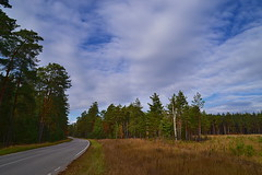 Grass, pines and cloudscape (МирославСтаменов) Tags: russia moscowregion cutting glade pinery cloudscape sky autumn edge