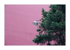 Bubblegum pink by hélène chantemerle -