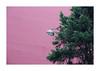 Bubblegum pink (hélène chantemerle) Tags: mur sapin lampadaire rue ville rose vert wall fir streetlight city pink green