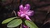 P1011060 (karsheg) Tags: art flowers gardens groundsforsculpture gfs nature newjersey outdoors sculpture spring