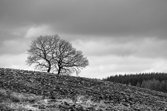 somewhere in Brecon Beacons (de_frakke) Tags: breconbeacons tree landscape bw zwartwit monochrome landschap wales