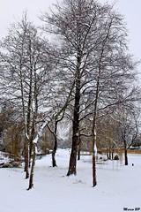 Photos Marco BP (14)_GF (marcbihanpoudec) Tags: bretagne neige plabennec plan deau lac banc arbres
