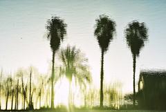 Los últimos rayos de sol (nemenfoto) Tags: nemenfoto paisaje landscape reflejos palmera palmeras reflections mallorca montuiri balears spain españa invierno winter hivern sunshine puestadesol