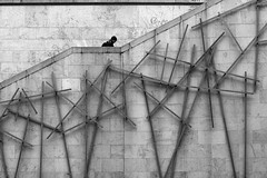 At the top of the wall (pascalcolin1) Tags: paris13 homme man mur wall top photoderue streetview urbanarte noiretblanc blackandwhite photopascalcolin 50mm canon50mm canon