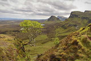 The most Photographed tree on the Isle of Skye..