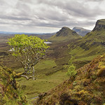 The most Photographed tree on the Isle of Skye.. thumbnail