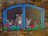 Brolo e i suoi gatti dipinti (frank28883) Tags: brolo nonio verbanocusioossola cusio lagodorta gatti chat chats cats gatos dipinto