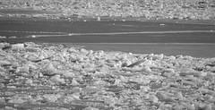 6Q3A4042 (www.ilkkajukarainen.fi) Tags: suomi suomi100 eu europa scandinavia happy life blackandwhite mustavalkoinen monochrome bw travel traveling korpoo nauvo nature luonto winter talvi snow ice jää lumi saaristo archipelago rengastie saariston