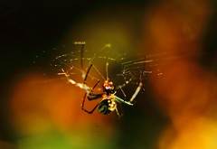 Browsing (Debmalya Mukherjee) Tags: debmayamukherjee canon550d 50mm extensiontubes spider spiderweb macro insects circles macromondays