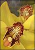 (Cliff Michaels) Tags: iphone8 photoshop pse9 kroger flower