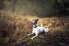 Looking for dreams (Estrella Morales) Tags: forest free funny fog dog dreams trees travel photograph shadows sunset sun sesion cadiz calm crazy cuentos magic mountains modelo nature autumn luz reportaje happy andalucia