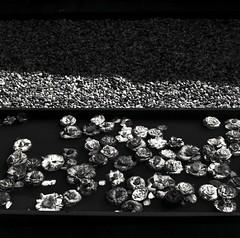 Simple times (Nobusuma) Tags: hasselblad hasselblad500cm zeissplanar 80mm f28 120 6x6 fuji acros neopan 100asa caffenolcm idevelopmyfilms homemadesoup mediumformat film analog ハッセルブラッド フィルム 自分でフィルム現像 中判写真 椿 砂利 camellia simple blackandwhite